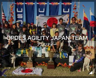 アジリティー 日本代表チーム「OPDES AGILITY JAPAN TEAM様」